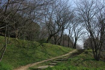 西乗鞍古墳の桜