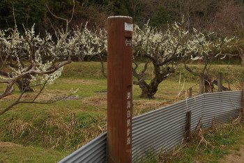 山之辺の道桃畑