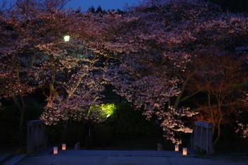 石舞台夜桜2