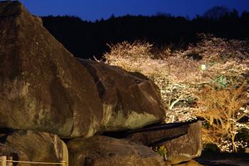 石舞台夜桜1