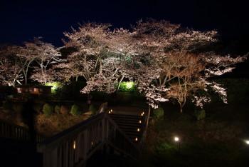 石舞台夜桜