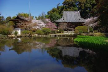 長岳寺池越しの境内