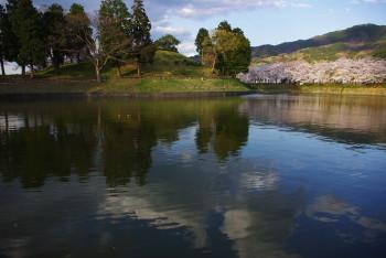 黒塚古墳の桜