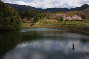 崇仁天皇陵から展望台の桜