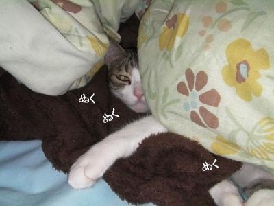 猫団子05