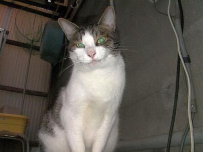 トイレの猫様01