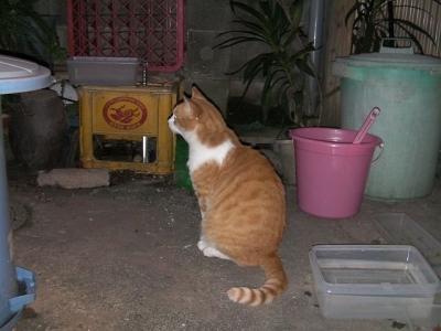 トイレの猫様03