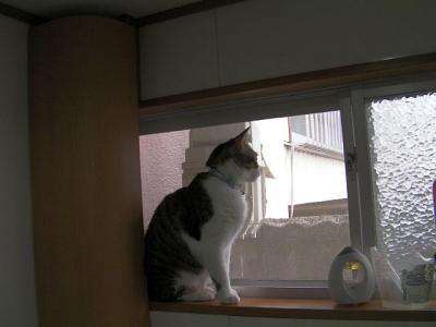 トイレの猫様06