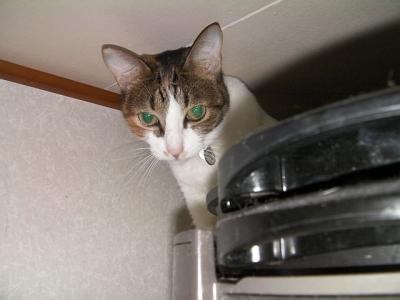 トイレの猫様07