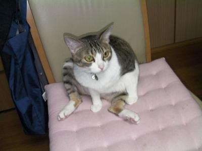 トイレの猫様09