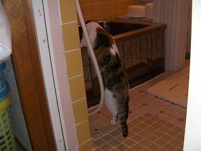 トイレの猫様10