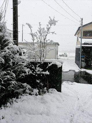 20111225_1.jpg