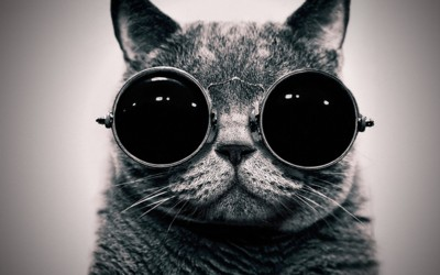 cat-with-glasses.jpg