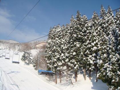 積雪の樹木