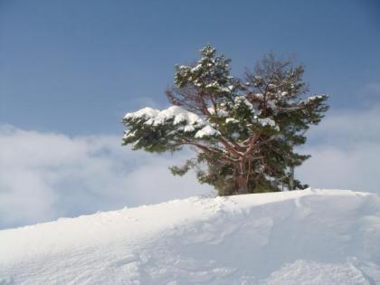 青空と雪山の樹木