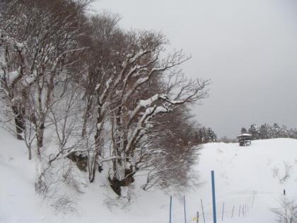 頂上リフト下りスロープ樹木