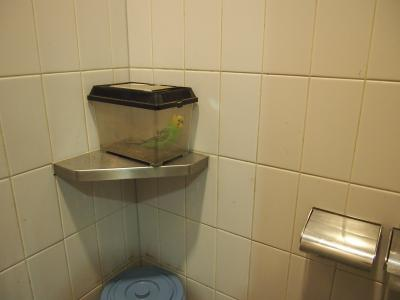 トイレに鳥
