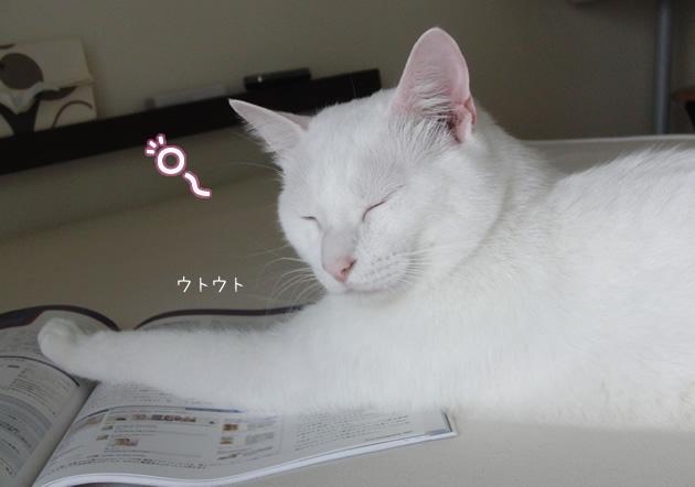 20110604_04.jpg