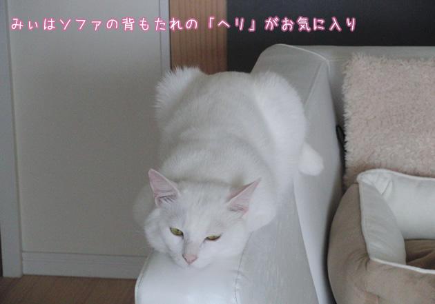 20110606_02.jpg