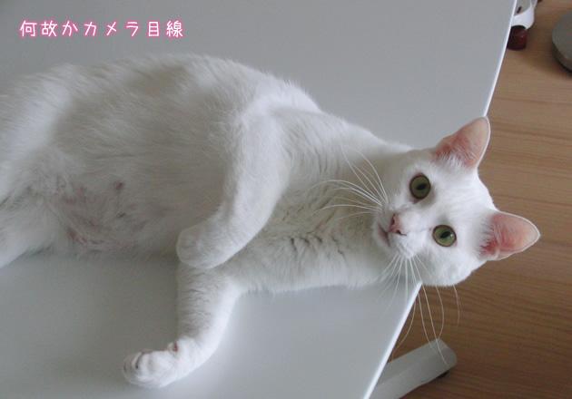 20110606_07.jpg