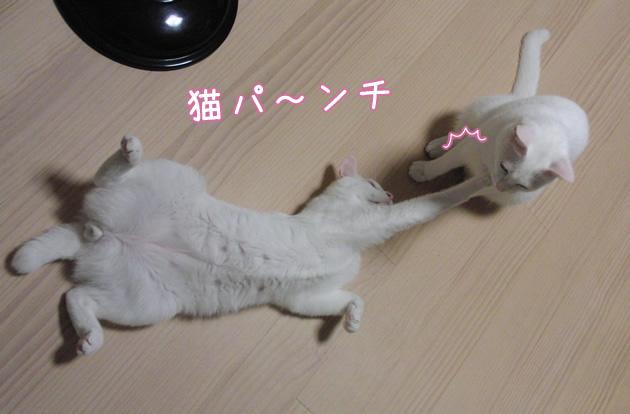 20110623_06.jpg