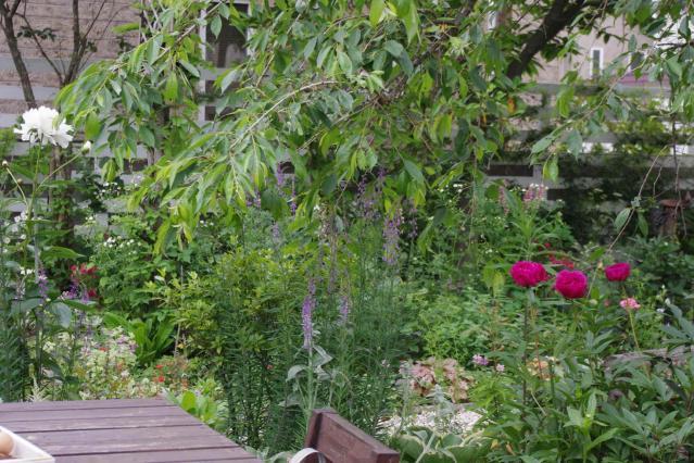 芍薬のお庭
