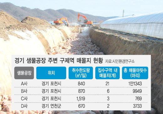 韓国産 豚生き埋め