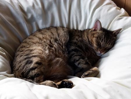 むき身で寝る1