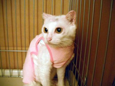 世田谷虐待被害猫ヒナちゃん