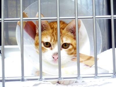 入院中の保護猫トヤ君