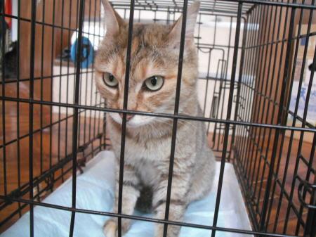 原発被災地保護猫c108