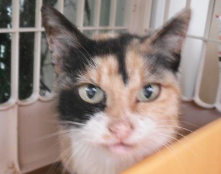 原発被災地保護猫c109