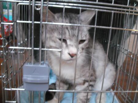 原発被災地保護猫c110