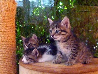3匹の保護子猫