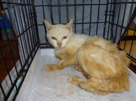 楢葉町のメス猫c130