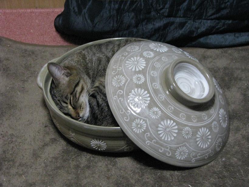 ナツ鍋完成2