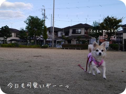 20141025-005.jpg