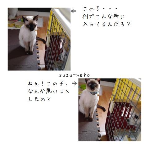 20141110-006.jpg