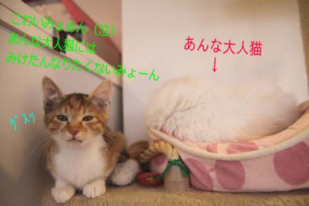 みけたん20101228