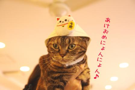 いちご20110103