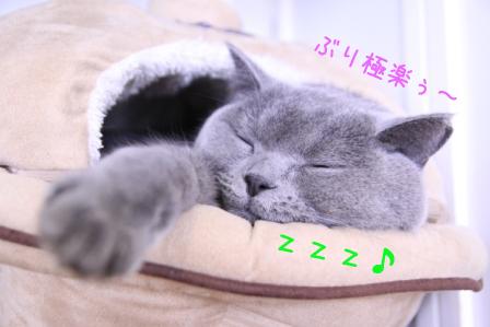 ぶり20110206-2