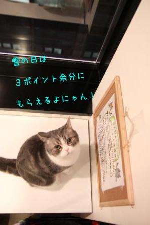 マール20110210