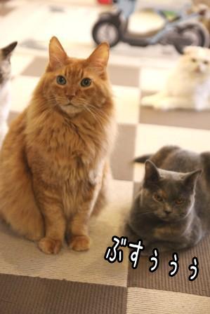 こぶ平20111102-3
