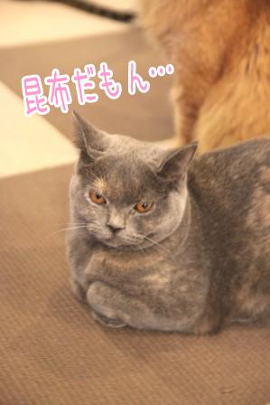 こぶ平20111102-5