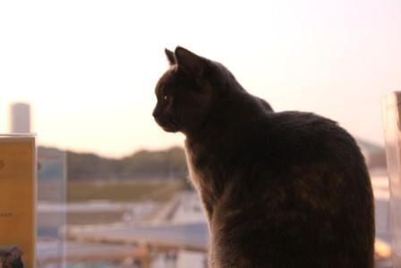こぶ平20111104