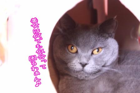 ぶり20111106-2