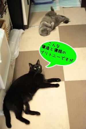 しろう店長20111122-2