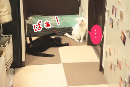 しろう店長20111218
