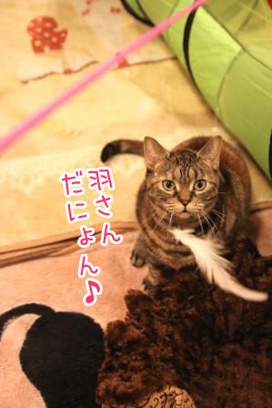 いちご20120120