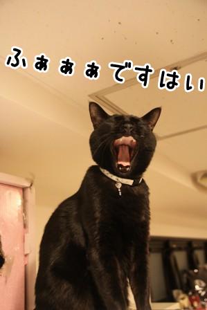 しろう店長20120126